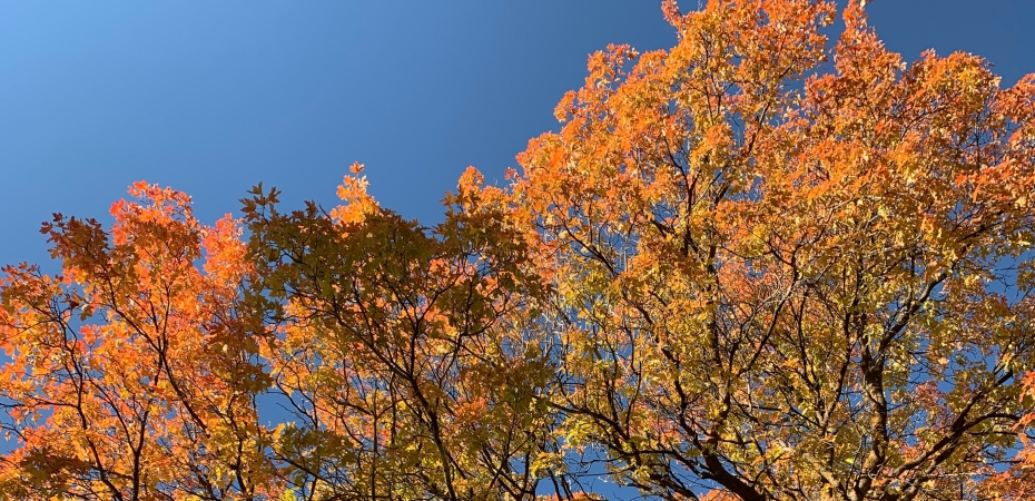 bright orange fall leaves