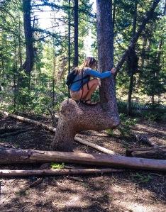 bent tree near Bear Lake Utah