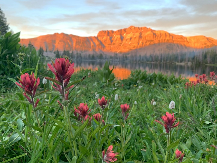 indian paintbrushes and wildflowers at Ruth Lake
